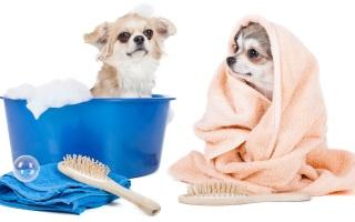 Мытье собак